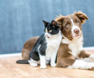 Vigie seu pet em tempo real: Como monitorar seu cachorro ou gato mesmo estando longe